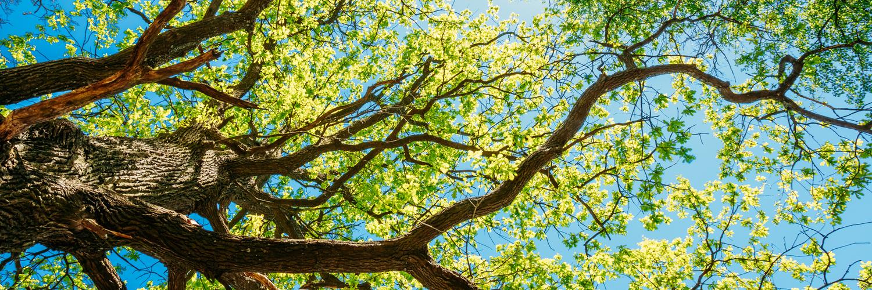 Arborist Insurance Massachusetts